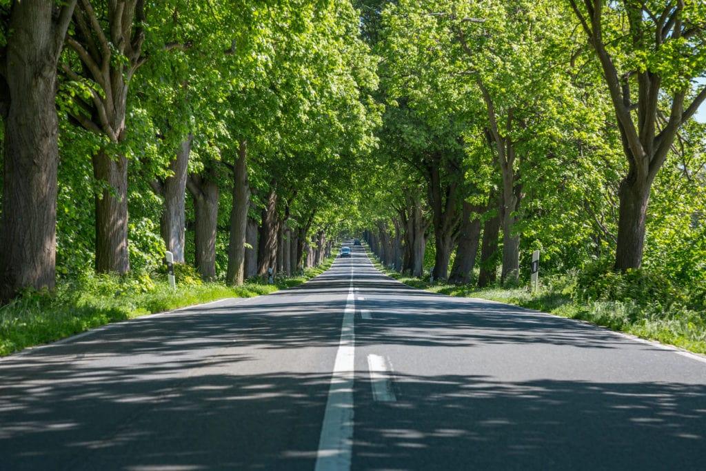Ein Teil der Deutsche Alleenstraße, die durch ganz Deutschland führt.