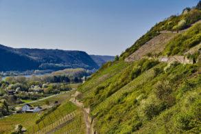 Weinberge am Mittelrhein in Rheinland-Pfalz