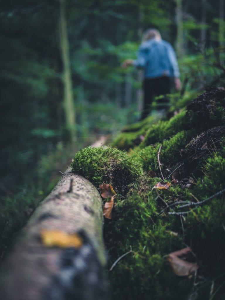 Clos-up eines kräftiges Asts mitten im Wald, im Hintergrund sieht man eine Wanderin