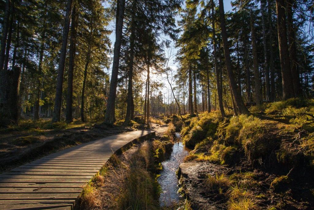 Sonnenlicht bahnt sich durch den dichten Wald bei Schierke