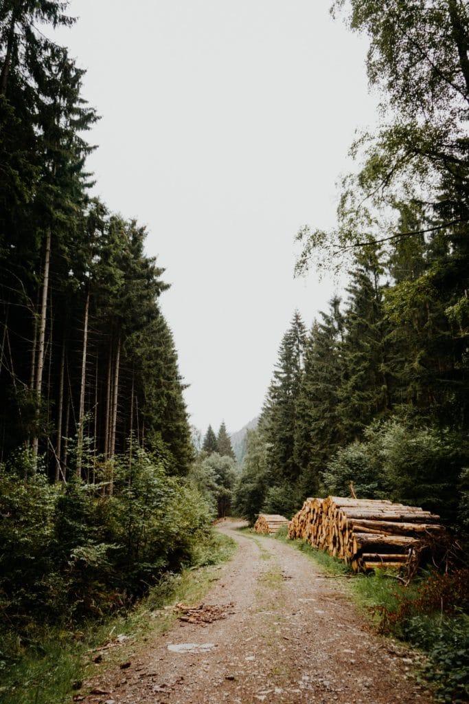 Waldweg im Harz mit Holz an der Seite
