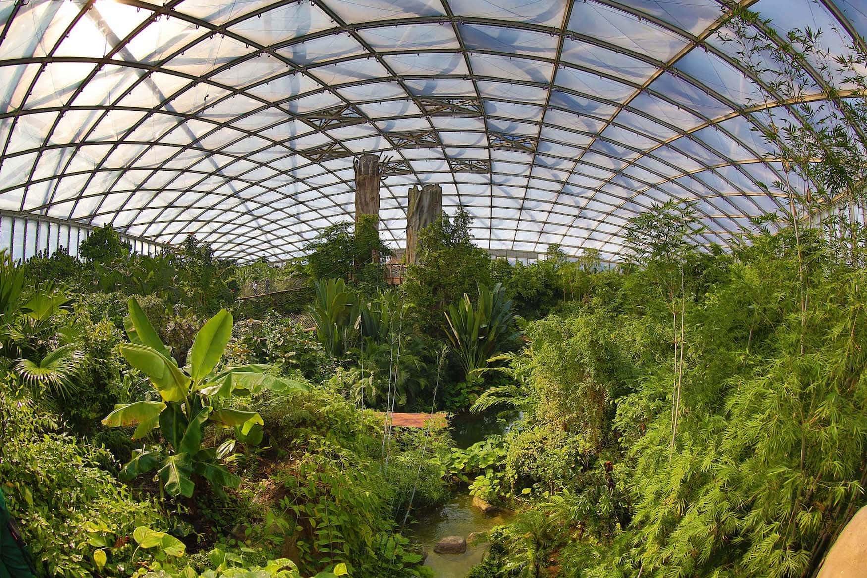 Beeindruckende Ansicht des riesigen Dschungels im Zoo Leipzig unter einem Glasdach