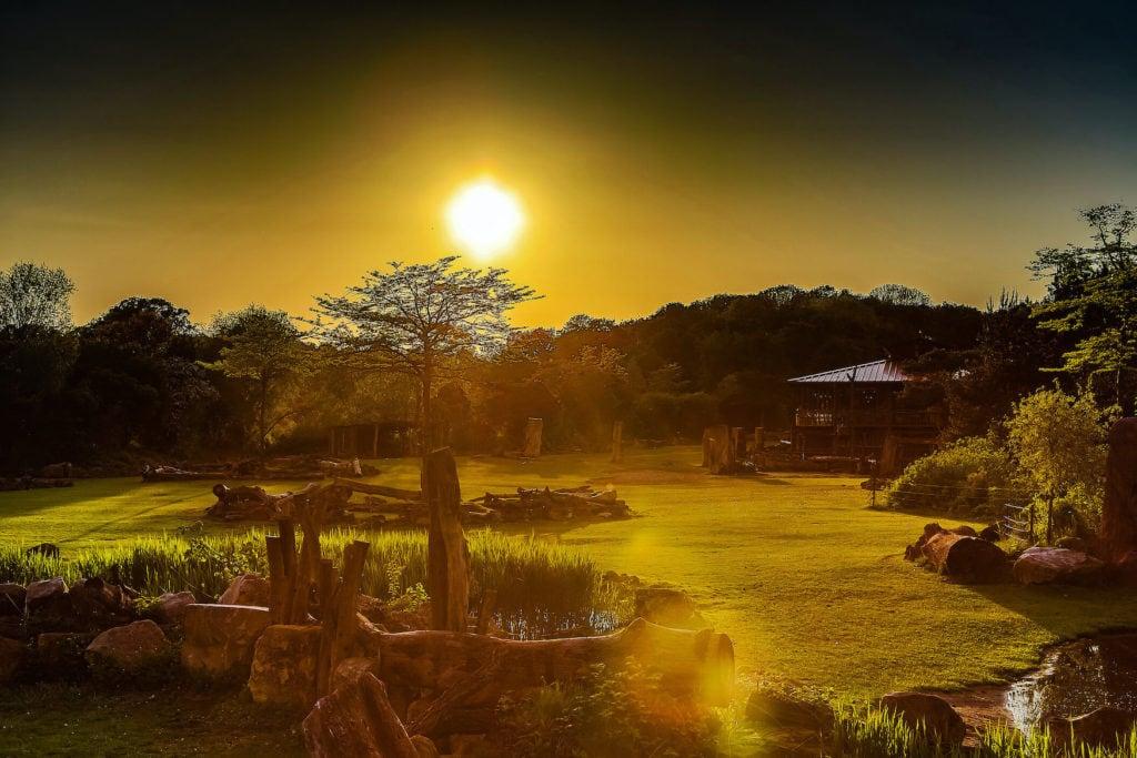 Sonnenuntergang über der Kawara Savanne im Zoo Leipzig