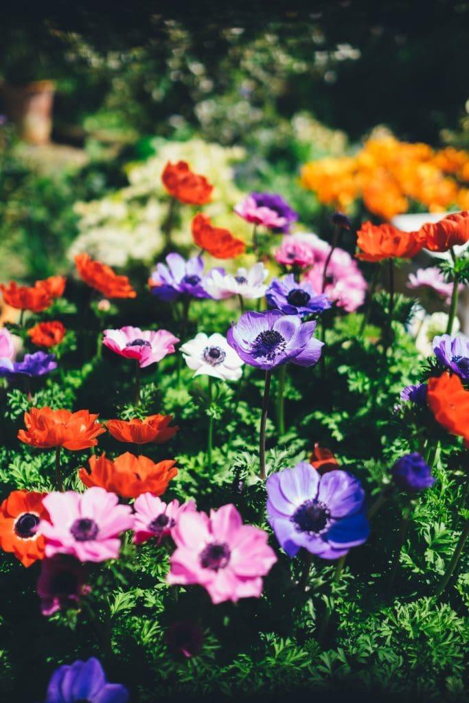 Bunte Blumen in deutschem Garten