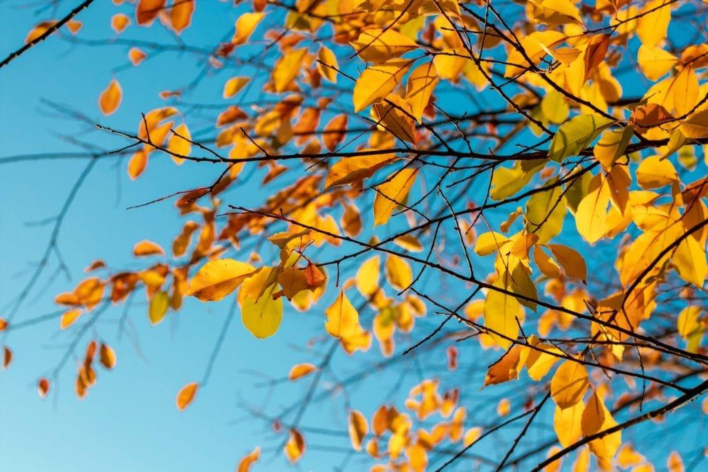 Orang farbene Blätter hängen an Ästen in Park in Regensburg