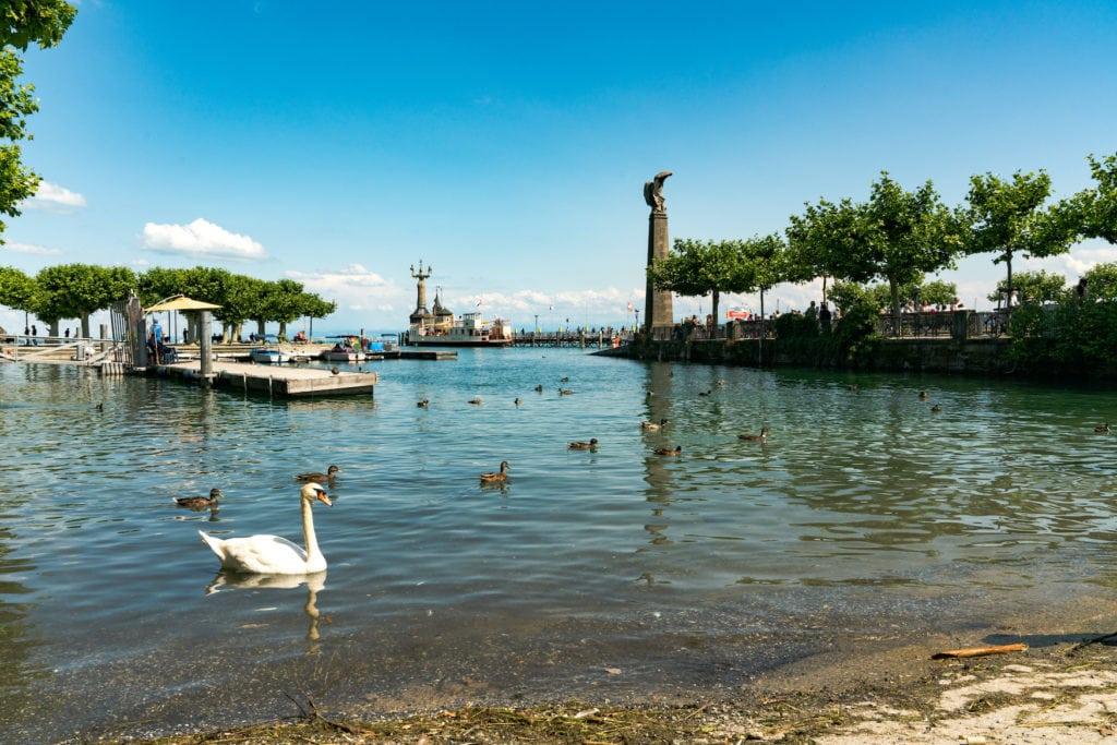 Schwäne auf Bodensee in konstanz