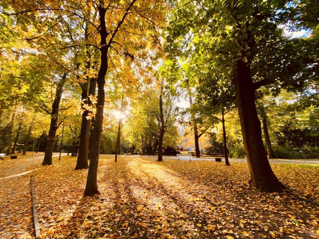 Herbstlicher Park in Regensburg