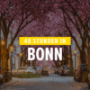 Was man in Bonn auf keinen Fall verpassen darf? Die Kirschblüte!