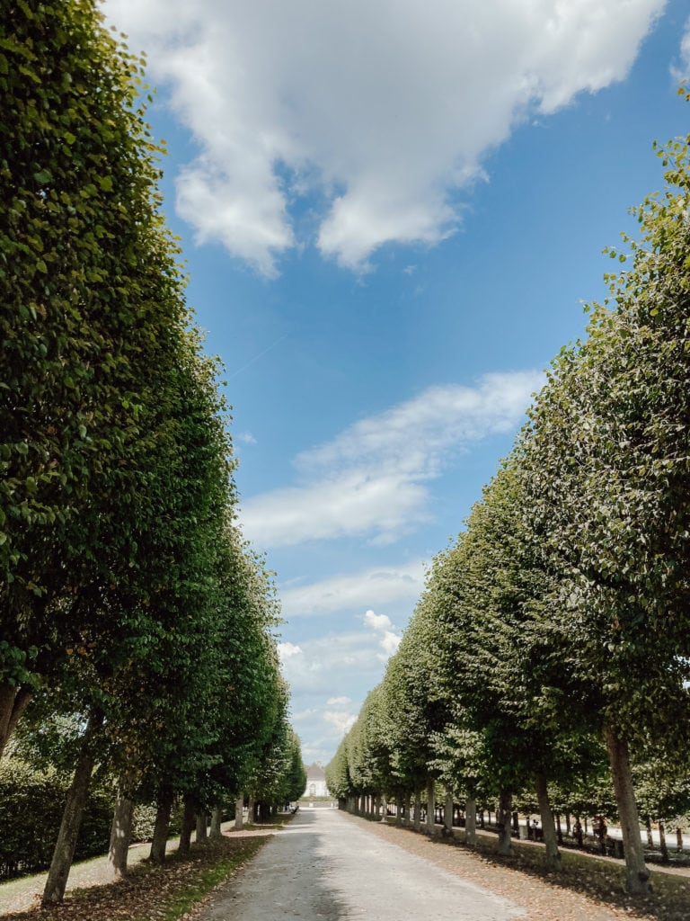 Baum-Allee im Schlosspark bei Brühl