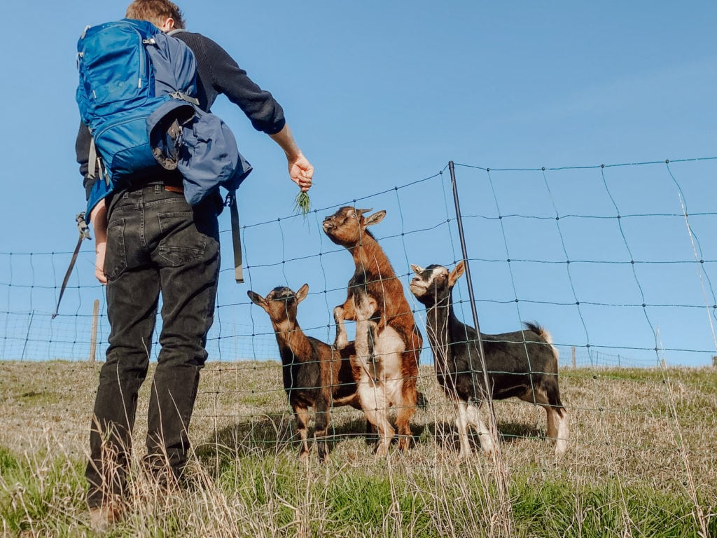 Ausflüge rund um Köln und dabei Ziegen füttern, das geht im Bergischen Land