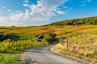 Wandern im Ahrtal: Im Herbst leuchtet der Rotweinwanderweg in schönen Rot- und Orangetönen