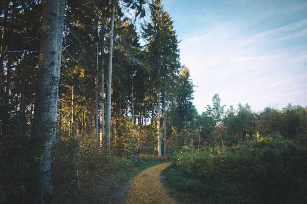 Waldweg in der Eifel