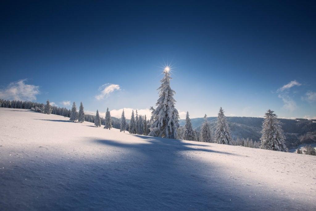 Verschneite Tannen im Skigebiet Feldberg