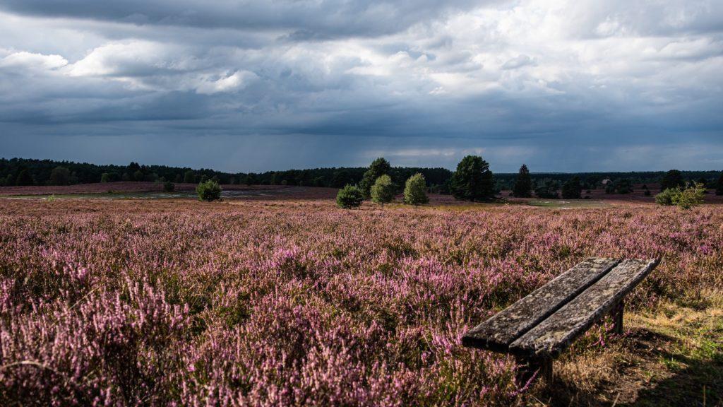 Felder der Lüneburger Heide