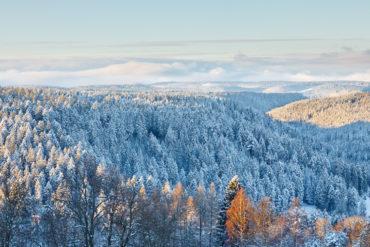 Magischer Schwarzwald im Winter