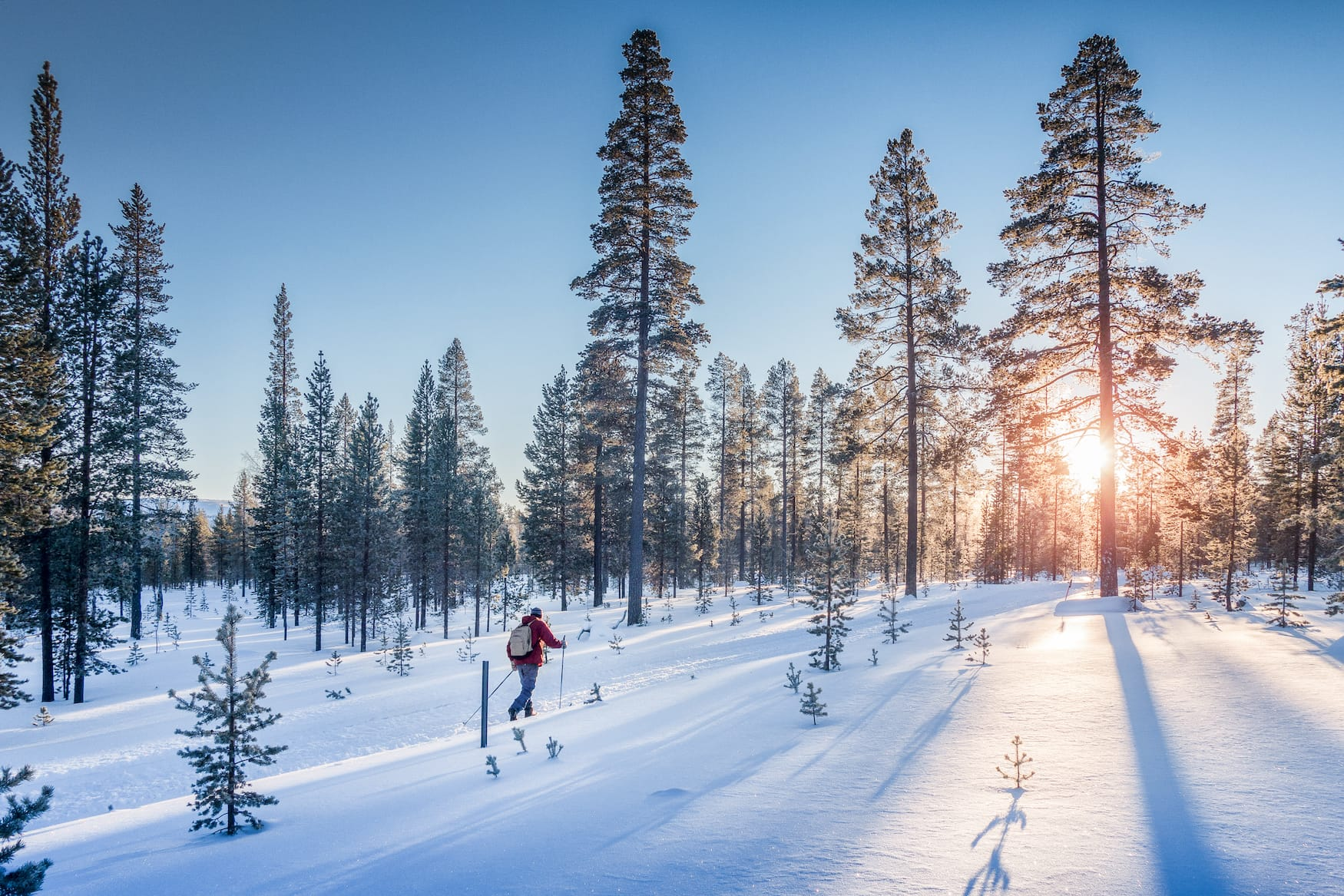 Langlauf in Winterlandschaft