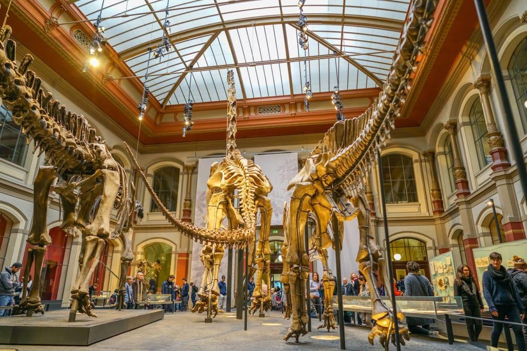 Dinosaurier-Skelette im Naturkundemuseum in Berlin