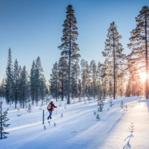 Cross country skiing in winter landscape