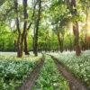 Wiese mit Wildkräutern im Thüringer Wald