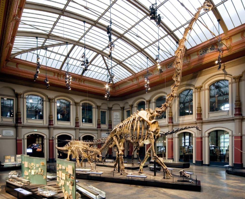 Dinosaurier in Deutschland gibt es im Museum für Naturkunde in Berlin zu sehen