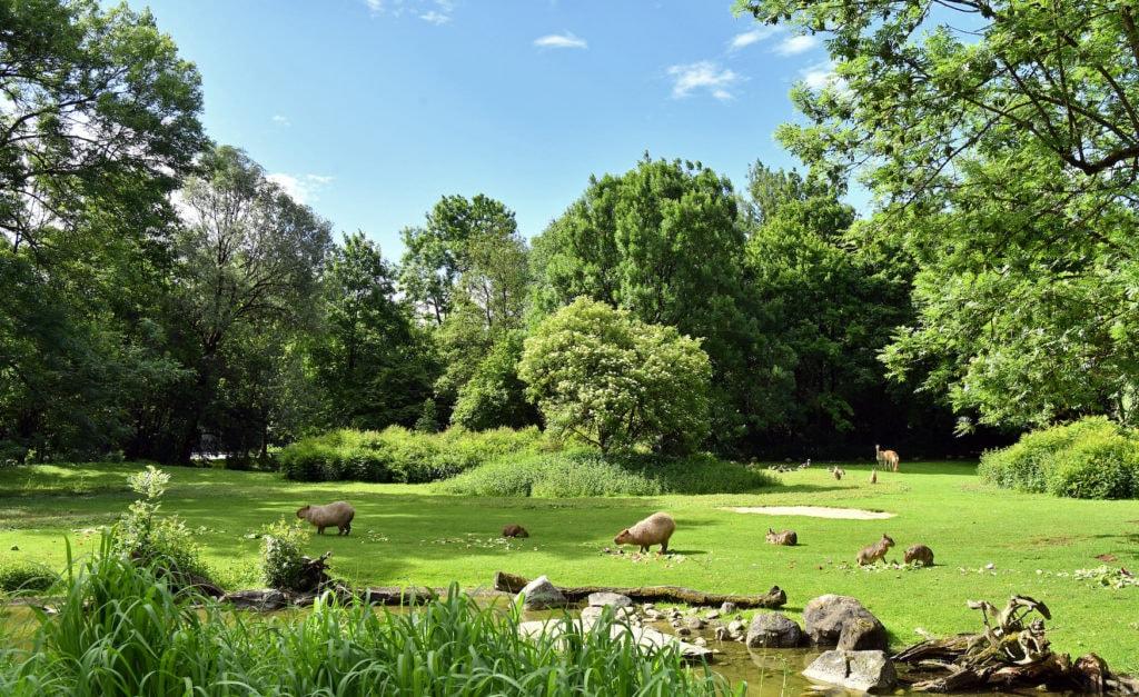 Südamerika Anlage in Hellabrunn, Zoo in München