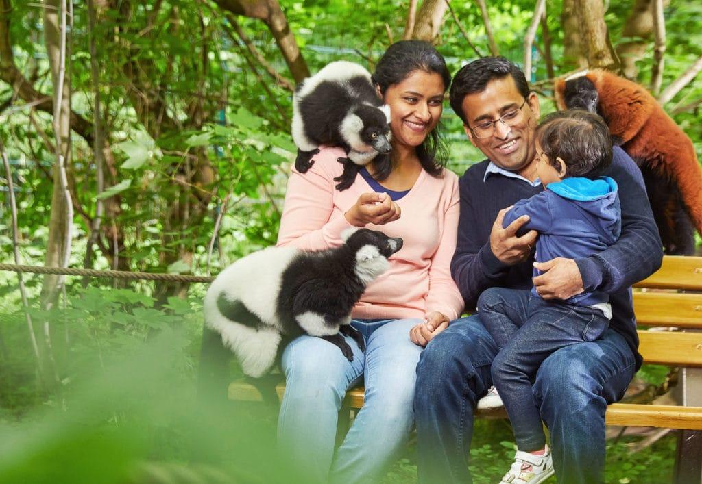 Familie sitzt im Vari-Wald im Tierpark Berlin und streichelt Lemuren