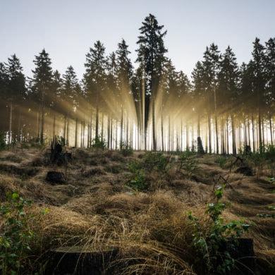 Licht strömt durch Bäume im Rothaargebirge