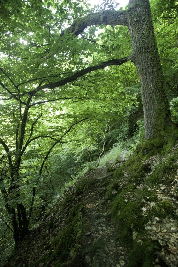 Weltendepfad bei Stein-Wingert auf dem Westerwaldsteig