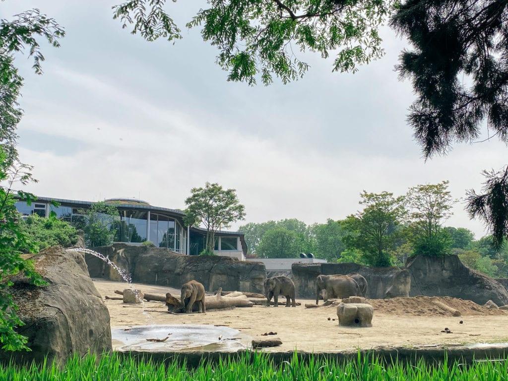 Elefantenhaus im Kölner Zoo