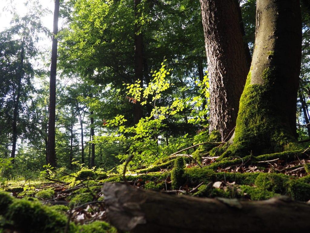 Waldbaden im Bayerischen Wald