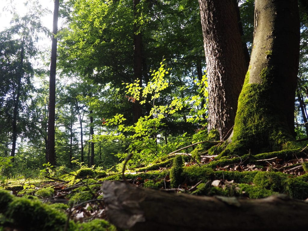 Forest bathing in the Bavarian Forest