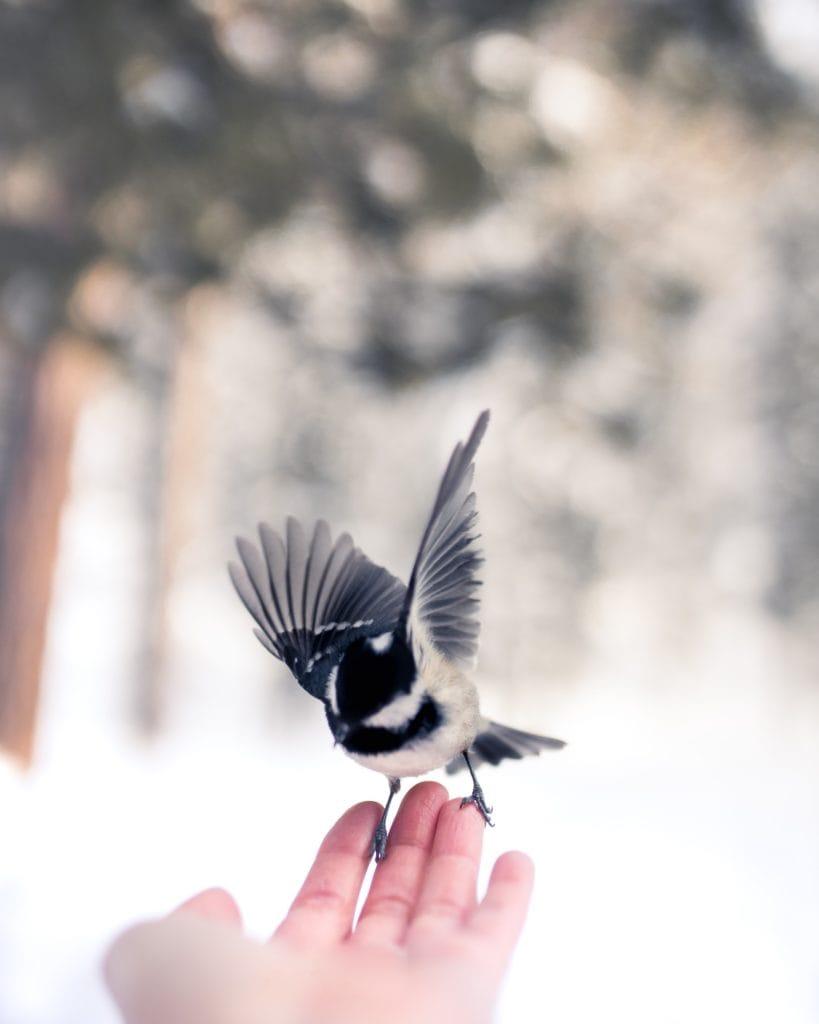 Bird flutters on a woman's hand