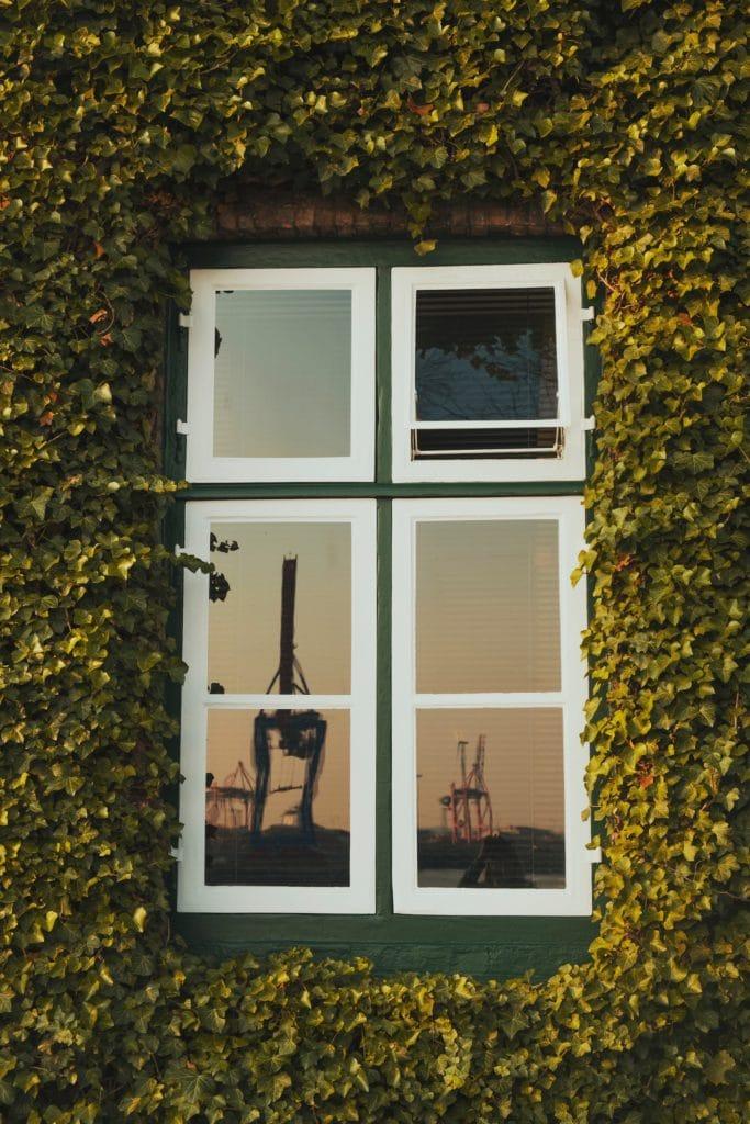 Krähen des Hamburger Hafens spiegeln sich in einem Fenster