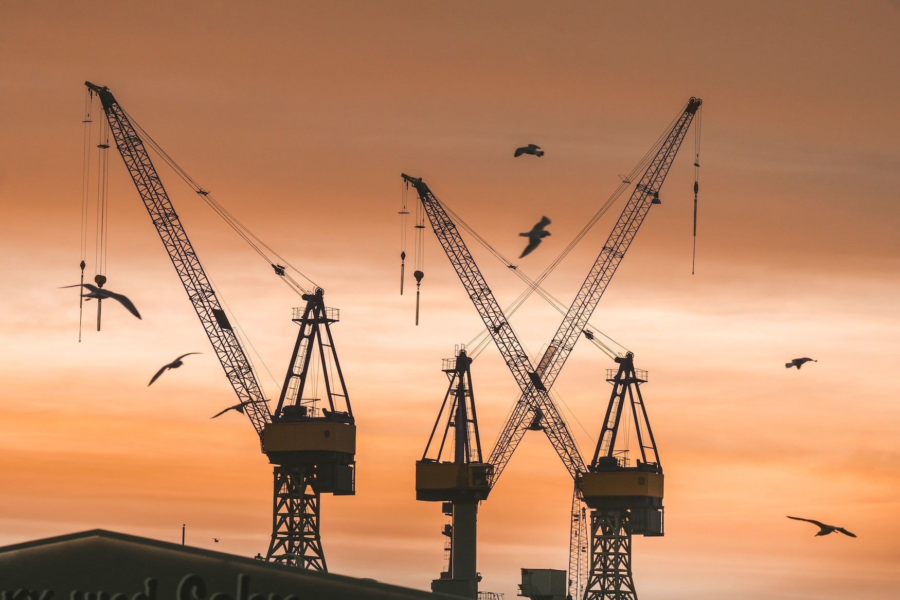 Krähen im Hamburger Hafen bei Sonnenuntergang