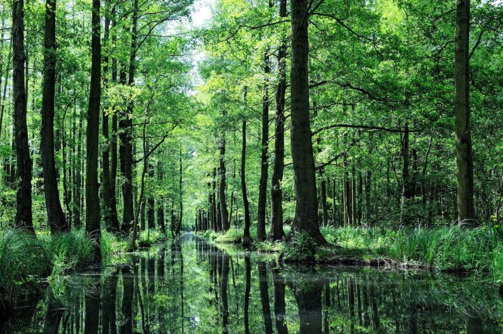 Flusslandschaften im Spreewald