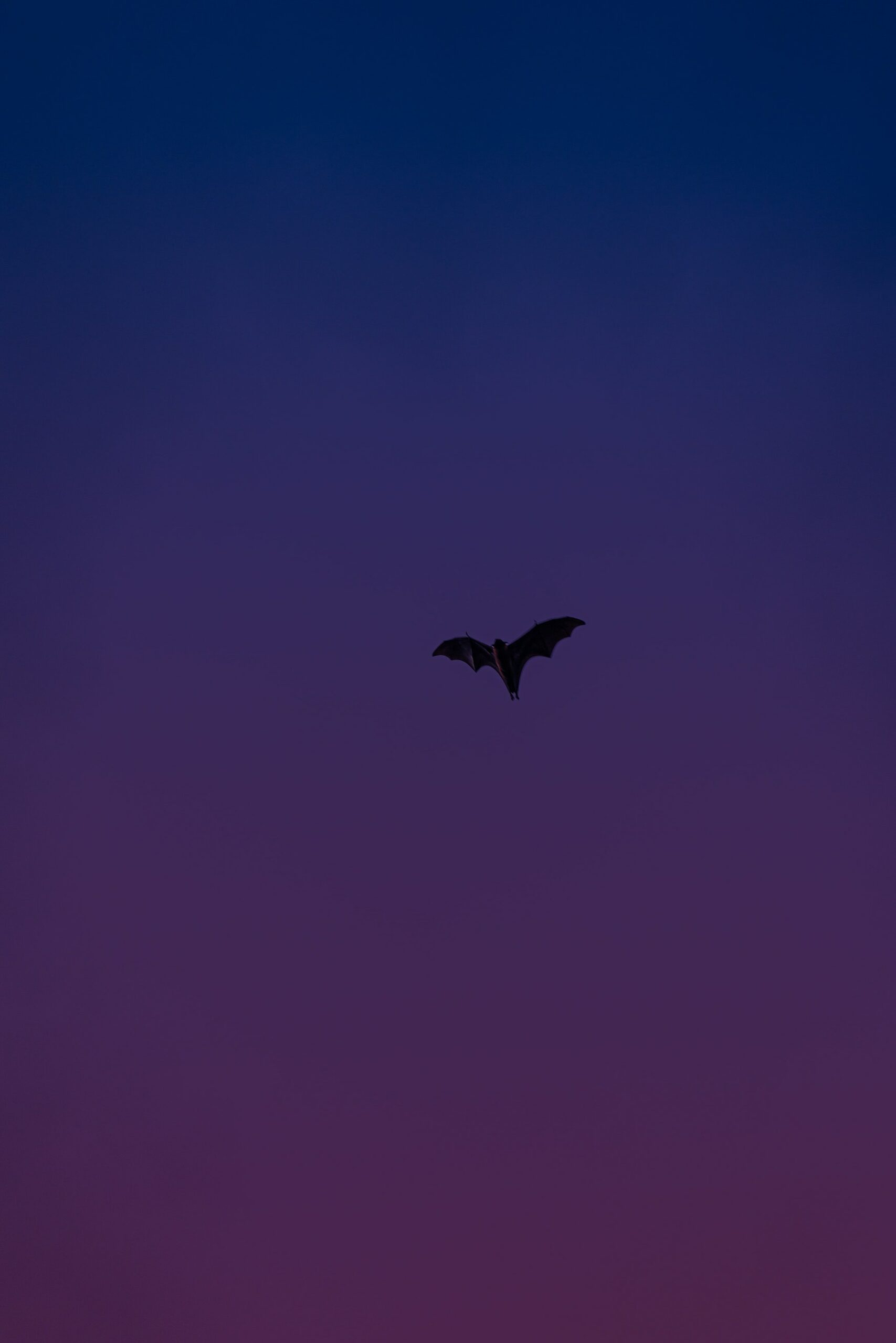 Fledermaus am Nachthimmel